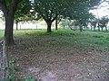 Juglans with fallen walnuts 2009.jpg