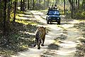 Jungle safari - Kanha National Park.jpg