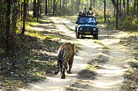 Jungle safari - Kanha National Park.jpg