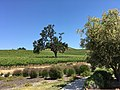 Justin Winery, Paso Robles CA.jpg