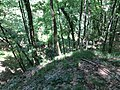 Kaniv Nature Reserve (May 2018) 90.jpg