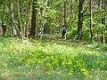 Kanonenberge - Gratweg (Ridge Walk) - geo.hlipp.de - 36648.jpg