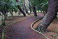 Kehi matsubara06s3872.jpg