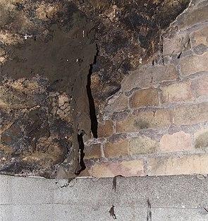Von einer Gewölbedecke hängendes Kellertuch (Zasmidium cellare)