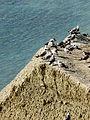 Khameleon cape, Koktebel, Crimea, seaguls.JPG