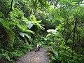 Kinsakubaru wildwood.jpg