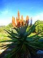 Kirstenbosch National Botanical Garden by ArmAg (17).jpg