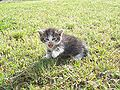 Kitten (04) by Ron.jpg