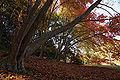 Kobe municipal forest botanical garden11s3872.jpg