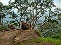 Kollengode South, Kerala, India - panoramio (43).jpg