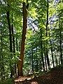 Kollunder-Wald-2020-1.jpg