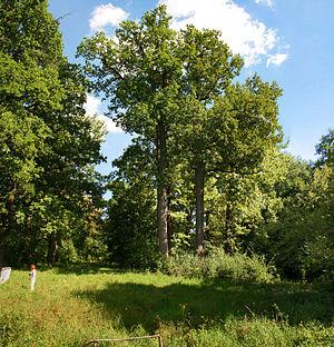 Belogorye Nature Reserve - Image: Krasny kutok 52