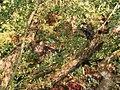 L'arbre à chats - panoramio.jpg