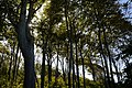 LSG Kühlung - Nienhäger Holz (Gespensterwald) (107).jpg