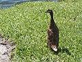 Lakeland Lake Mirror Promenade bird02.jpg