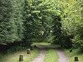 Lane from Tilquhillie Castle - geograph.org.uk - 1370107.jpg