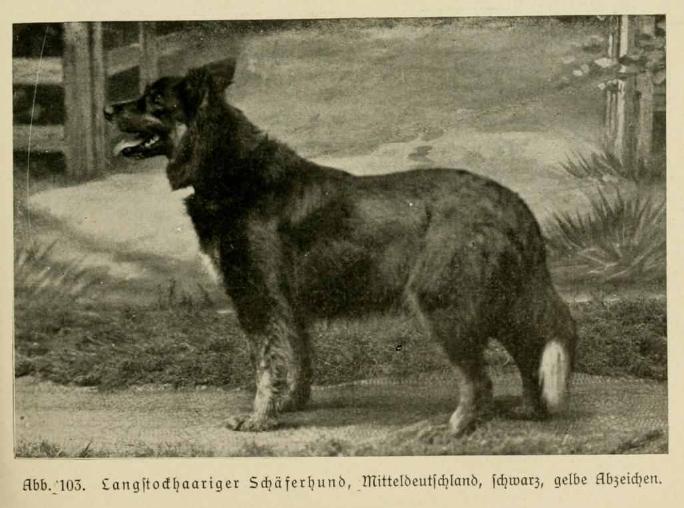 File:Langstockhaariger Schäferhund Mitteldeutschland schwarz gelbe Abzeichen.xcf