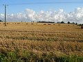 Large straw bales await collection - geograph.org.uk - 520847.jpg