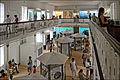 Le Muséum dhistoire naturelle de Saint-Denis de la Réunion (4128766888).jpg