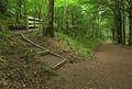 Learmount Forest path.jpg