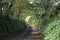 Leaves on the roadside - geograph.org.uk - 1538199.jpg