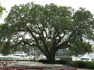 Sea Pines Resort - The Liberty Oak in Harbor Town