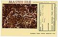 Lichens, diaper moss, lingonberries - DPLA - 88a51ee8fa104b6b07947030a0d2eb63.jpg
