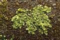 Lichens (26517130207).jpg