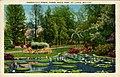 Lily Ponds, Tower Grove Park (NBY 436849).jpg