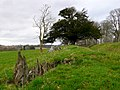 Little Minterne Hill - geograph.org.uk - 1773140.jpg