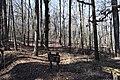 Little Mountain Trail Hugh White State Park 1.jpg