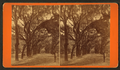 Live Oak Avenue, Bonaventure, from Robert N. Dennis collection of stereoscopic views 15.png