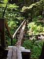 Log Bridge west of Laura Creek.JPG