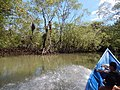 Los manglares de la playa San pedro.jpg