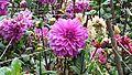 Lovely lady purple flowers.jpg