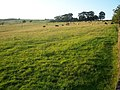 Loxley Chase - geograph.org.uk - 1384287.jpg