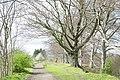 Lumley Park Woods. - geograph.org.uk - 5827.jpg
