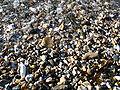 Lyme Regis harbour 11.JPG
