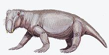 A pink/grey four-footed animal. The head is facing slightly toward you, and has two big teeth. It is covered in fur and has sharp claws.
