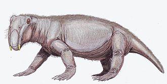 Lystrosaurus - Lystrosaurus georgi