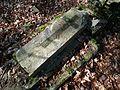 MOs810 WG 15 2016 (Pyzdry Forest II) (Anielewo, old ev. cemetery) (11).JPG