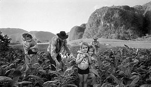 Viñales Valley - Manuel Rivera-Ortiz: Tobacco Harvesting, Viñales Valley, Cuba 2002