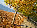 Macedonia IMG 2557 (11955280495).jpg