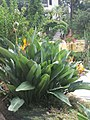 Madeira - Funchal - Jardim Botanico (2093602928).jpg