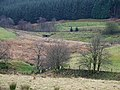 Maesnant joining the Afon Tywi , Powys - geograph.org.uk - 1086646.jpg