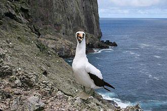 Malpelo Island - Image: Malpelo nazca booby NOAA
