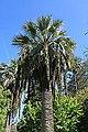 Malta - Attard - San Anton Gardens 86 ies.jpg