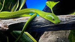 Mamba Verde 2014-04-10-063.jpg