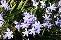 Mani ziedi My flowers - panoramio (16).jpg