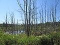 Marsh near Clarkin, PEI (9702454472).jpg